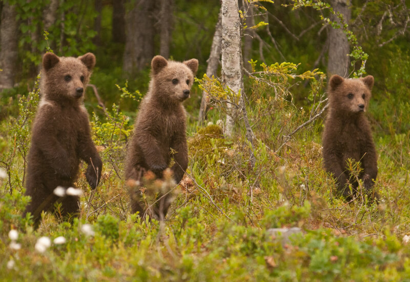 Wild Brown Bear Hotel, Finland 2